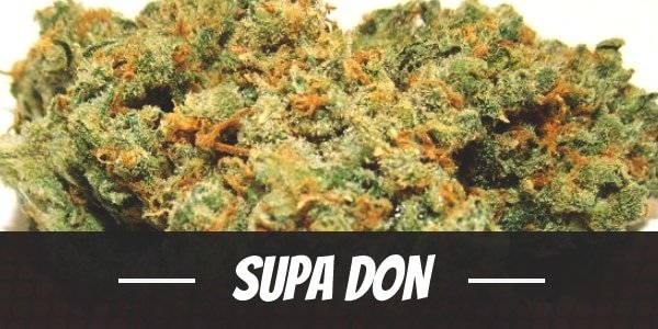 Supa Don