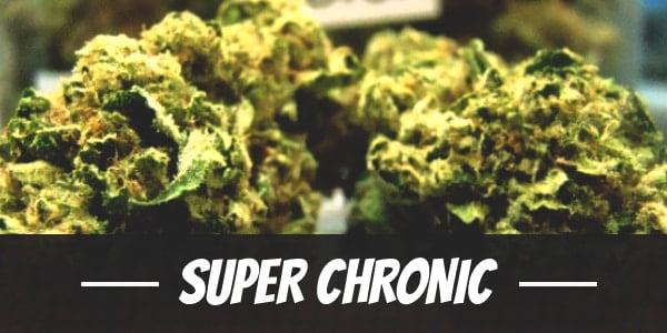 Super Chronic