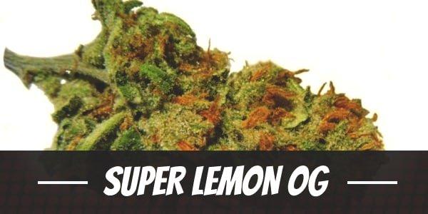 Super Lemon OG
