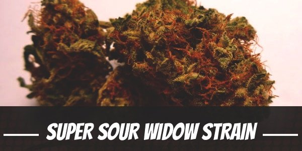 Super Sour Widow Strain