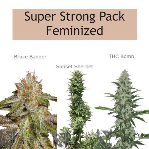 MSNL - Super Strong Pack Feminized