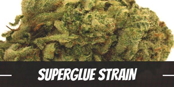 Superglue Strain