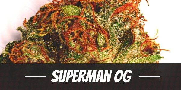 Superman OG
