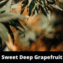 Sweet Deep Grapefruit Strain