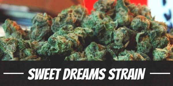 Sweet Dreams Strain