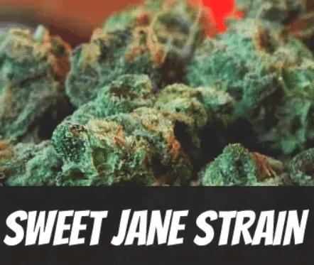 Sweet-Jane-Strain