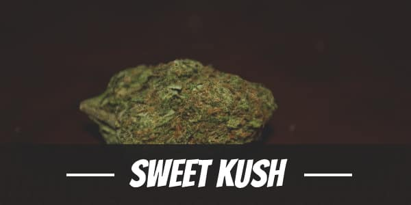 Sweet Kush