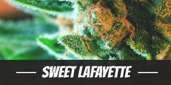 Sweet Lafayette