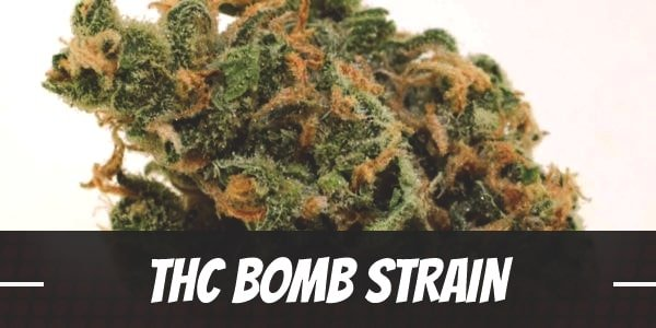 THC Bomb Strain