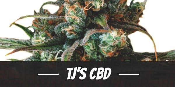 TJ's CBD Strain