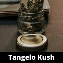 Tangelo-kush-strain