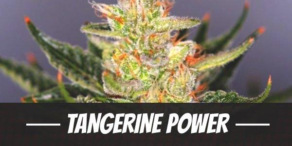 Tangerine Power