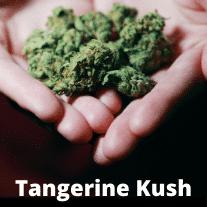 Tangerine-kush-strain