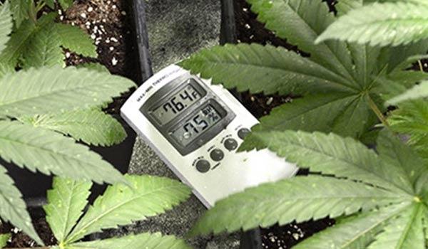 Temperature and humidity for growing marijuana