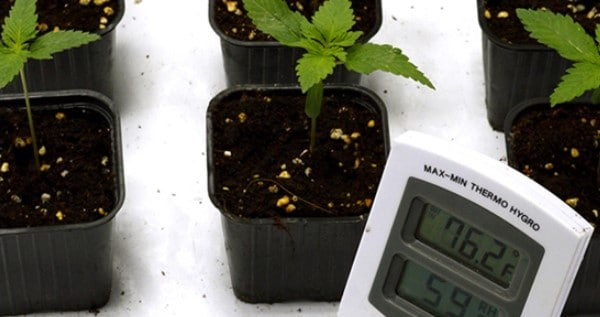 Temperature between 68ºF and 77ºF for cuttings and seedlings
