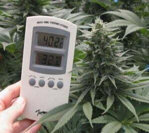 Temperature in cannabis grow room