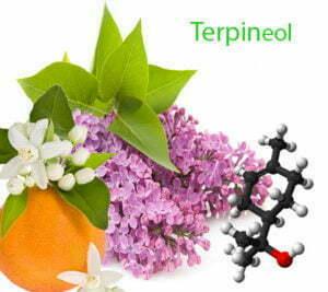 Terpineol in cannabis