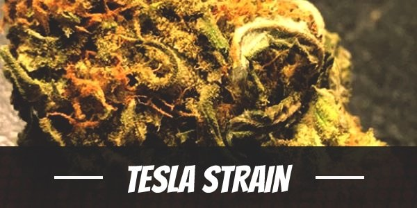 Tesla Strain
