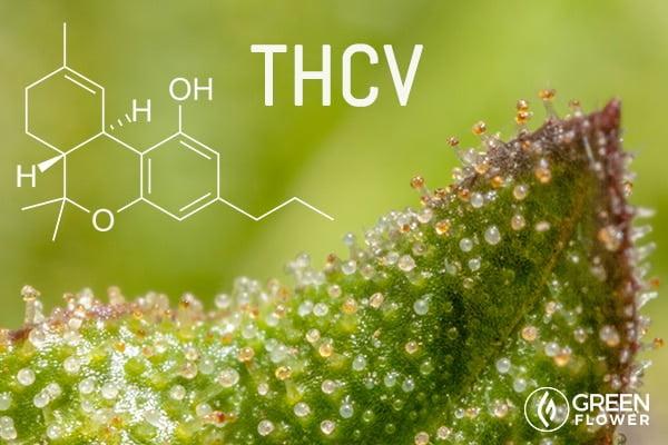 Tetrahydrocannabivarin (THCV)