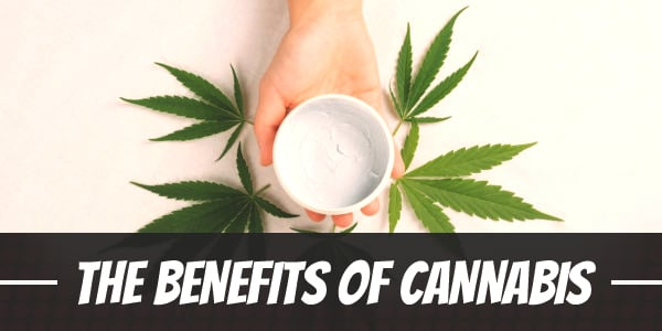 Hand holding cannabis cream with marijuana leaves on the background