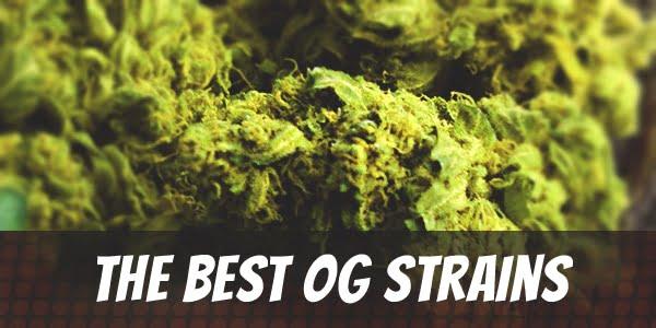 The Best OG Strains