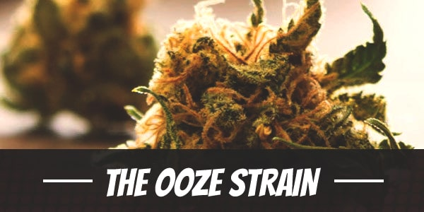 The Ooze Strain