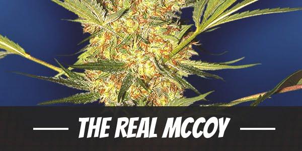 The Real McCoy Strain