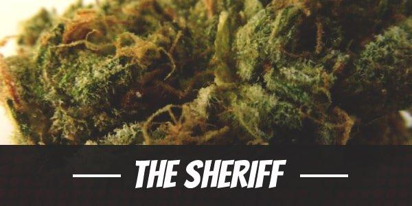 The Sheriff Strain