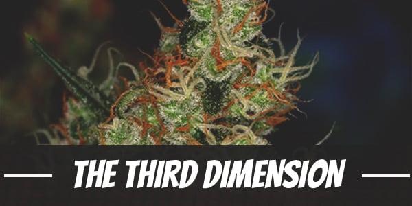 The Third Dimension Strain