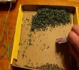 The best way to remove marijuana seeds