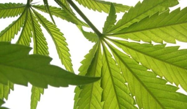 The complete guide to growing marijuana naturally 2