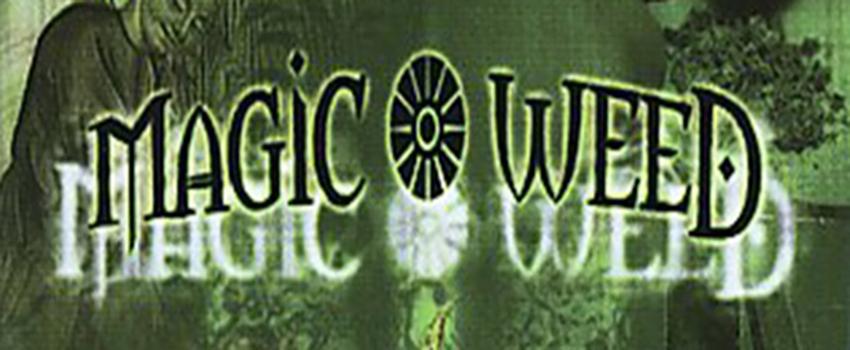 The Magic Weed: History of Marijuana