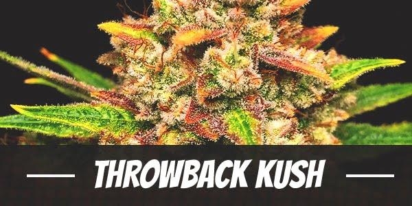 Throwback Kush Strain