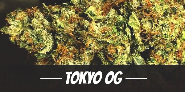 Tokyo OG Strain