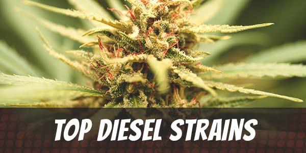Top Diesel Strains