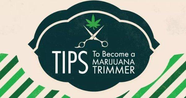 Trimmer Or Budtender Job In Alaska