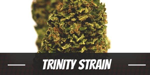 Trinity Strain