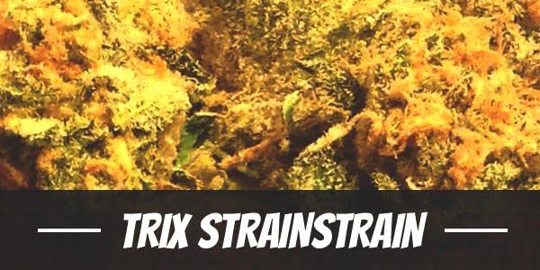 Trix Strain