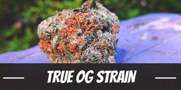True OG Strain