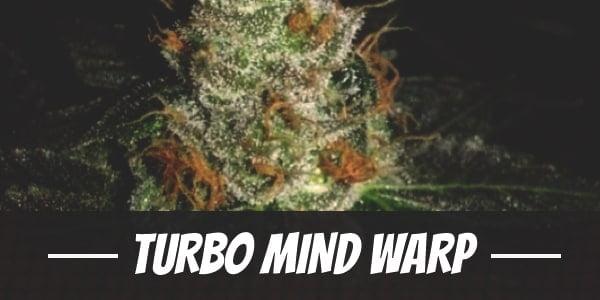 Turbo Mind Warp