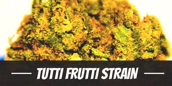Tutti Frutti Strain