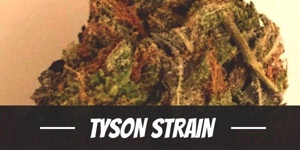 Tyson Strain