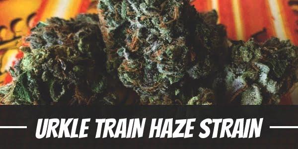 Urkle Train Haze Strain