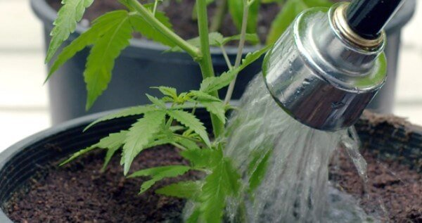 Use tap water to save money