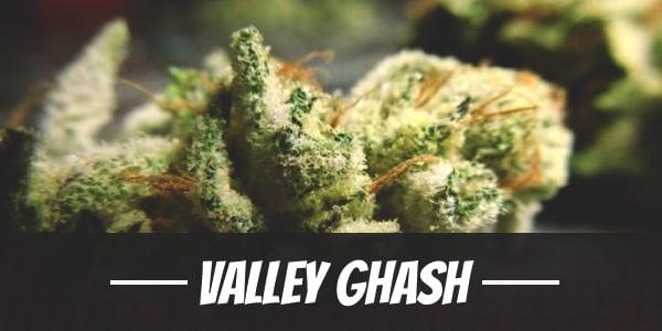 Valley Ghash Strain