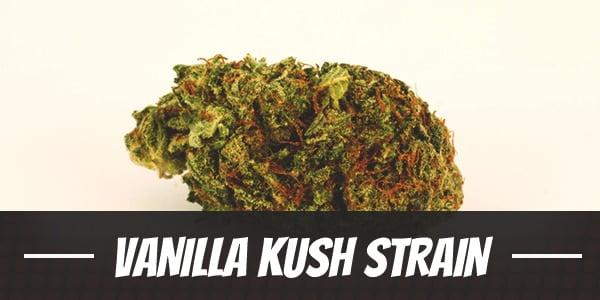 Vanilla Kush Strain