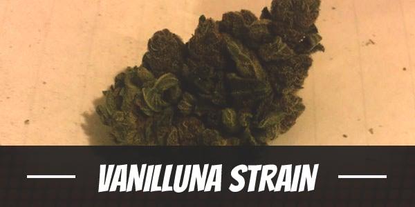 Vanilluna Strain