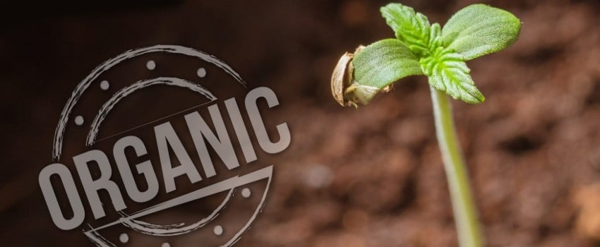 Veganic vs. organic growing