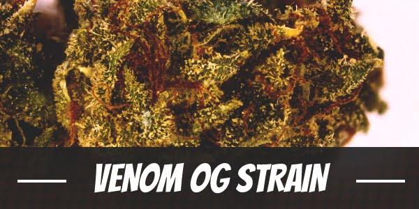 Venom OG Strain