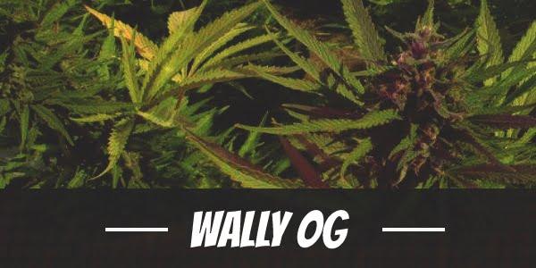 Wally OG